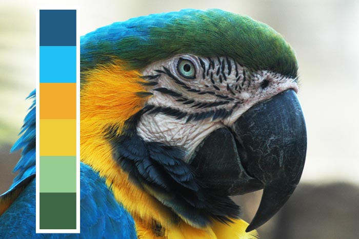 blue macaw inspired blue color palette theme