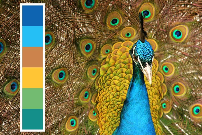 Peacock inspired blue color palette theme