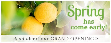 Lemon Leaf Prints Grand Opening