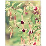 Pretty fuchsia flower art print