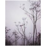 WIld flowers in mist art print