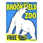 Digitally Restored 8x10 Vintage Brookfield Zoo Polar Bear Art Print