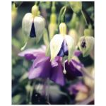 Purple Fuchsia flower art print