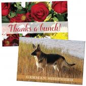 general greeting postcards and thank you postcards