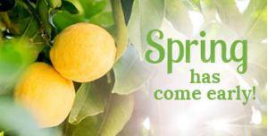 Lemon Leaf Prints Grand Opening Announcement