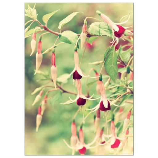 Pretty fuchsia flower art print