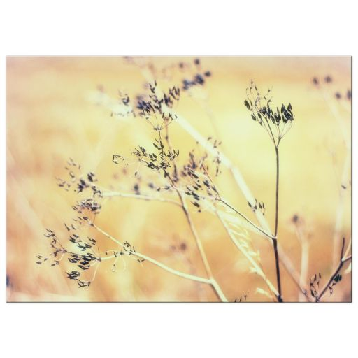 Golden Yarrow art print