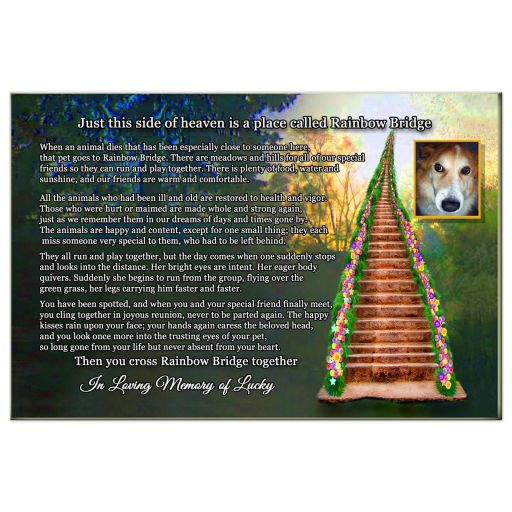 rainbow bridge pet loss poem