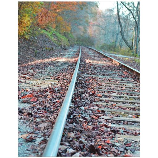 Train tracks photography art print