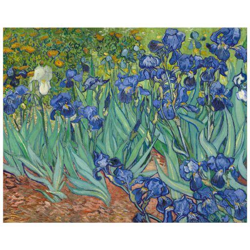 8x10 Wall Art Reproduction of Van Gogh's Irises