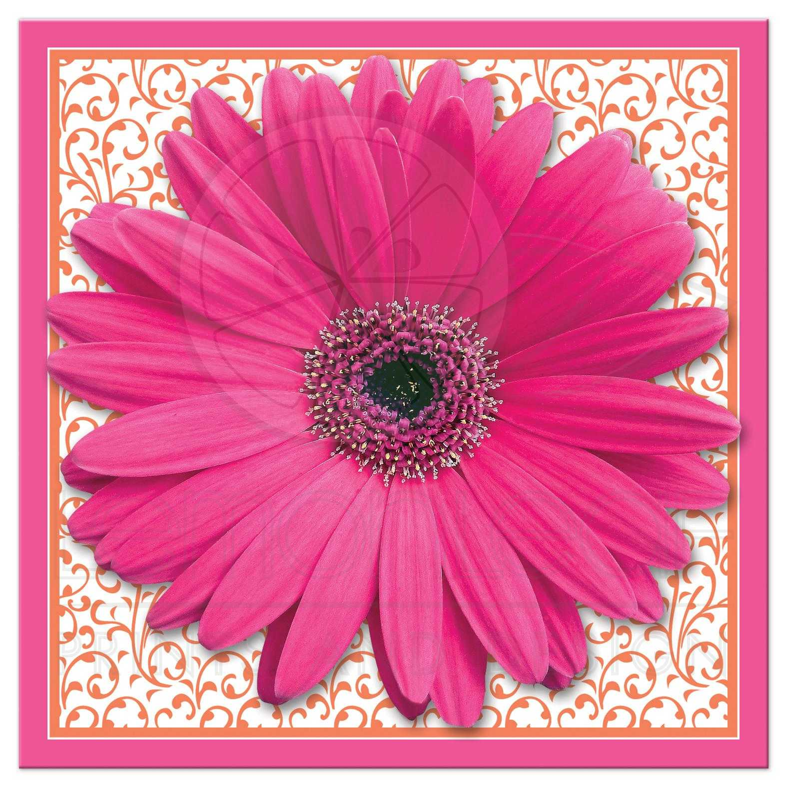 Bridal Shower Invitation Pink Orange Gerber Daisy Square