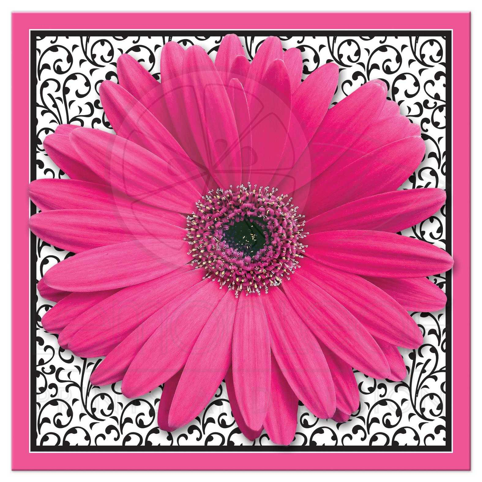 Bridal Shower Invitation Pink Black Gerber Daisy Square