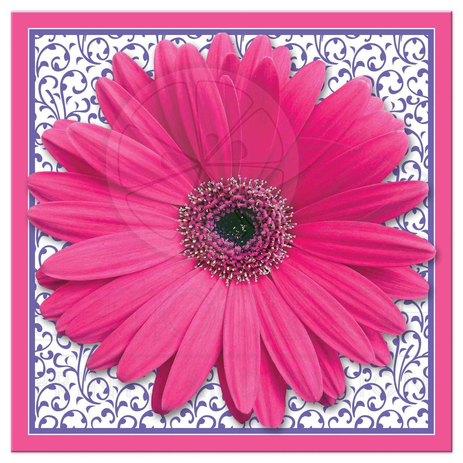 Bridal Shower Invitation Pink Purple Gerber Daisy Square